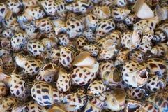 蛤蜊在海鲜市场上在香港,中国 免版税库存图片