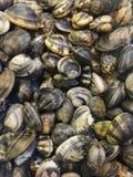 蛤蜊在鱼市上 免版税库存照片