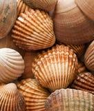 蛤蜊壳 库存照片