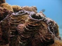 蛤蜊巨人 免版税库存图片
