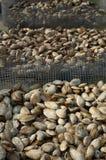 蛤蜊市场海鲜 库存照片
