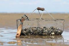 蛤蜊篮子  免版税库存图片