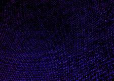 蛤蜊紫色在深黑色树荫下  库存照片