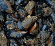 蛤蜊 图库摄影