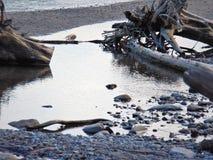 蛤蜊水 免版税库存图片
