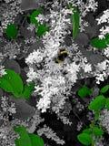 蜂、花和自然 库存照片