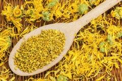 蜂与干燥黄色金盏草的花粉五谷 免版税图库摄影