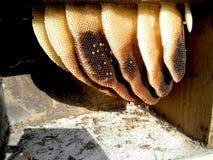 养蜂业和蜂窝 库存照片