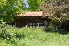 养蜂业在霍赫芬,荷兰 免版税库存图片
