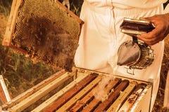 养蜂业工具 库存照片