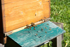 养蜂业 库存照片