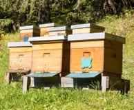 养蜂业 免版税库存图片