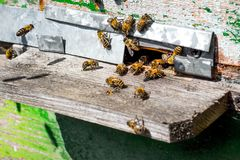 蜂临近蜂房 在apiary_的老蜂房 图库摄影