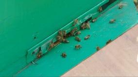 蜂临近蜂箱 影视素材