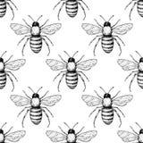 蜂传染媒介无缝的样式 手拉的昆虫背景 免版税库存照片
