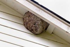 蜂入蜂巢房子住宅 免版税图库摄影