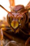 黄蜂关闭 免版税库存照片