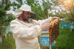 蜂农与蜂和蜂箱一起使用在蜂房 养蜂 库存图片