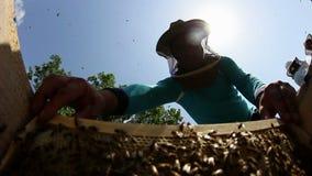 蜂农在工作 影视素材