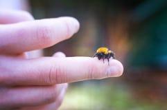蜂农在庭院保留在他的手指的一只蜂 免版税库存图片