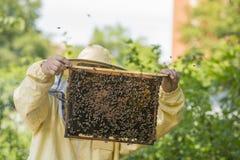 蜂农在蜂房工作-增加框架 免版税库存照片