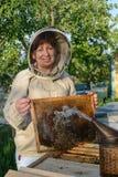 蜂农妇女控制蜂箱和梳子框架 养蜂 免版税库存照片
