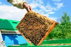 蜂农审查在蜂窝的蜂 在一个蜂窝的手上用蜂蜜 免版税库存图片