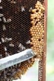蜂农工作 免版税库存照片