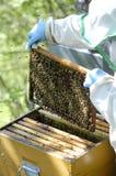 蜂农工作 免版税库存图片