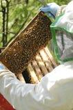 蜂农工作 图库摄影