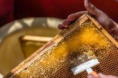 蜂农开盖与特别叉子的蜂窝 免版税库存图片