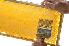 蜂农开盖蜂窝 免版税库存照片