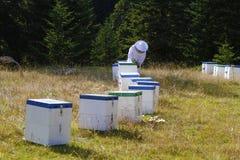 蜂农开头蜂箱 免版税库存图片