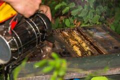 蜂农抽烟入被打开的蜂房 免版税库存照片