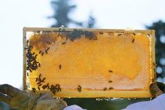 蜂农拿着蜂箱 免版税图库摄影