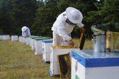 蜂农检查蜂箱 免版税库存照片