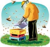 蜂农照料他的蜂房 库存照片