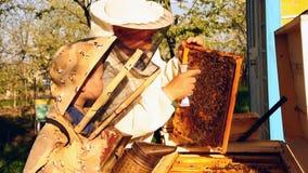 蜂农祖父和孙子审查蜂蜂房  影视素材