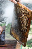 蜂农项检查 免版税库存照片