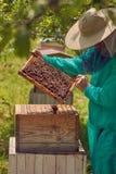 蜂农画蜂窝 库存图片
