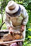 蜂农 图库摄影