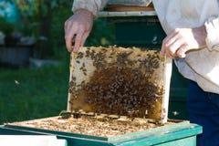 蜂农#4 库存图片