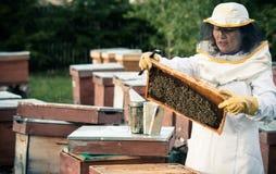 蜂农2 库存照片