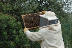 蜂农 库存照片