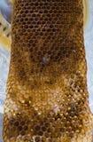 蜂吃从蜂窝的最后蜂蜜 免版税图库摄影