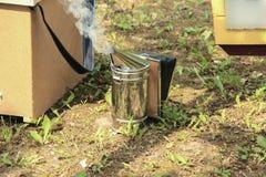 蜂吸烟者特写镜头  免版税图库摄影