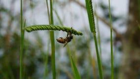 蜂和日出 免版税图库摄影