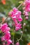蜂和桃红色花 图库摄影