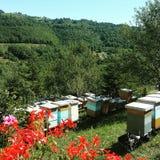 蜂和自然 库存照片