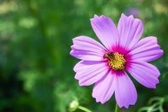 蜂和花在庭院里 免版税图库摄影
